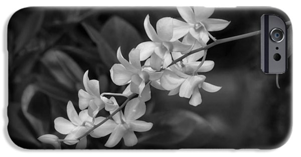White Orchid iPhone Cases - White Orchid Spray iPhone Case by Kim Hojnacki