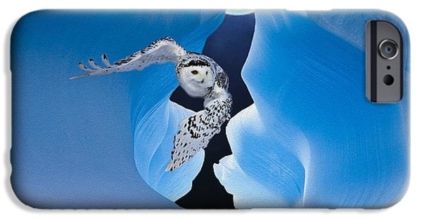 Disc iPhone Cases - White Owl iPhone Case by Jack Zulli