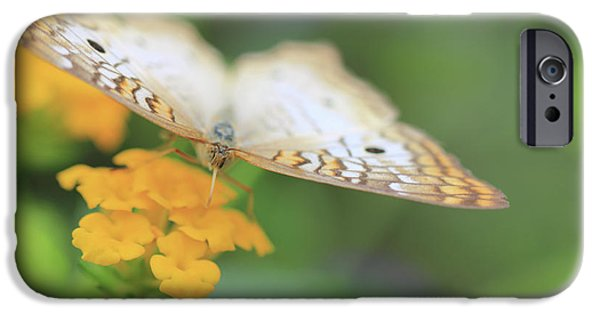 Hershey iPhone Cases - White Peacock Butterfly iPhone Case by Shelley Neff