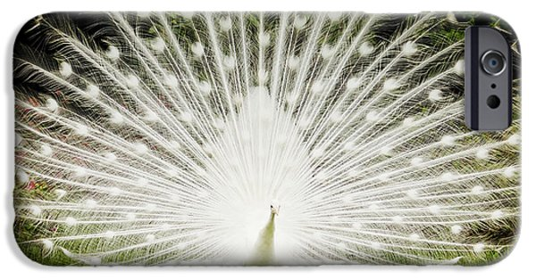 Peacock iPhone Cases - White Peacock  iPhone Case by Dustin K Ryan