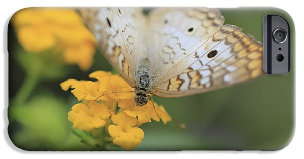 Hershey iPhone Cases - White Peacock iPhone Case by Shelley Neff