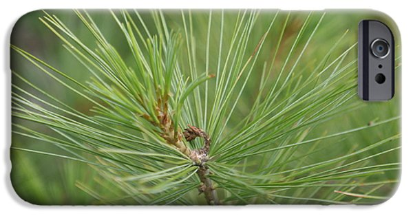 Pines iPhone Cases - White Pine iPhone Case by Sheri Toro