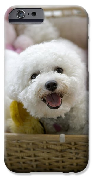 Stuffed Animal iPhone Cases - White Poodle Lying In Bed With Stuffed iPhone Case by Gillham Studios