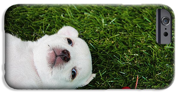 Cute Puppy iPhone Cases - White puppy iPhone Case by Queso Espinosa