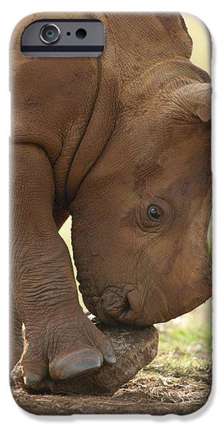 White Rhinoceros Ceratotherium Simum iPhone Case by Matthias Breiter