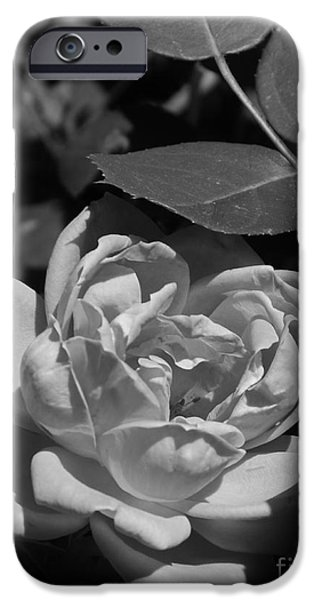 Interior Scene iPhone Cases - White Rose In The Moonlight iPhone Case by Bob Sample