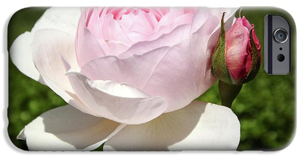 Pinkish iPhone Cases - White Rose iPhone Case by Lourry Legarde
