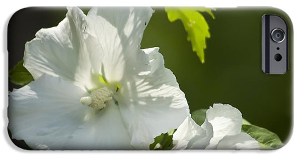 Althea iPhone Cases - White Rose of Sharon Squared iPhone Case by Teresa Mucha