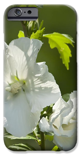 White Rose of Sharon Squared iPhone Case by Teresa Mucha