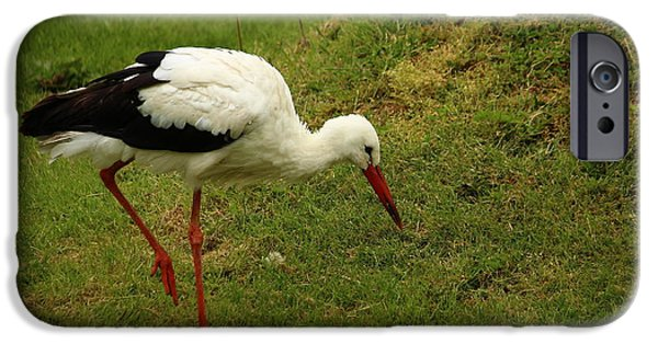 Meadow Photographs iPhone Cases - White Stork iPhone Case by Heike Hultsch