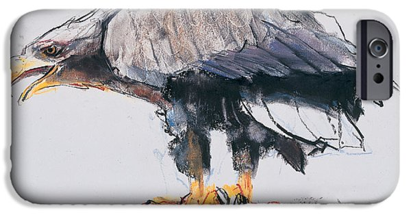 Animal Drawings iPhone Cases - White tailed Sea Eagle iPhone Case by Mark Adlington