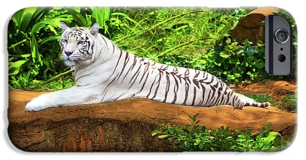 Large Mammals iPhone Cases - White tiger iPhone Case by MotHaiBaPhoto Prints