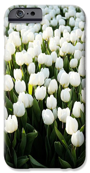 Denmark iPhone Cases - White Tulips In the Garden iPhone Case by Linda Woods
