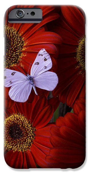 Insects Photographs iPhone Cases - White Wings On Red Daisy iPhone Case by Garry Gay