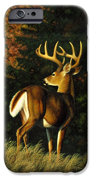 Whitetail Deer iPhone Cases - Whitetail Buck Phone Case iPhone Case by Crista Forest