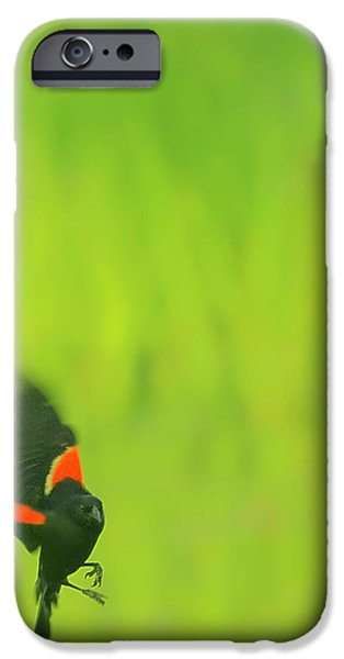 Who are you looking at iPhone Case by Aimelle