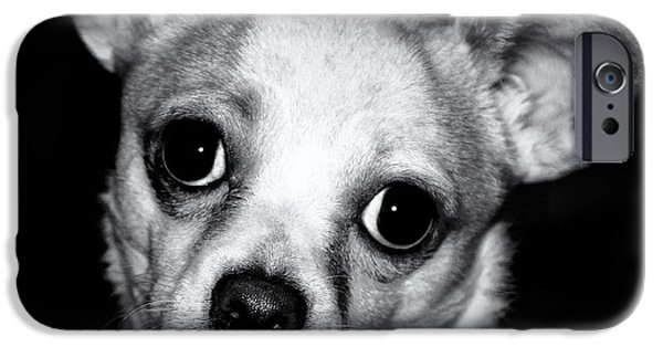 Black Dog iPhone Cases - Who Can Resist iPhone Case by Roger Wedegis