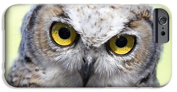 Animals Photographs iPhone Cases - Whooo iPhone Case by Tom Buchanan