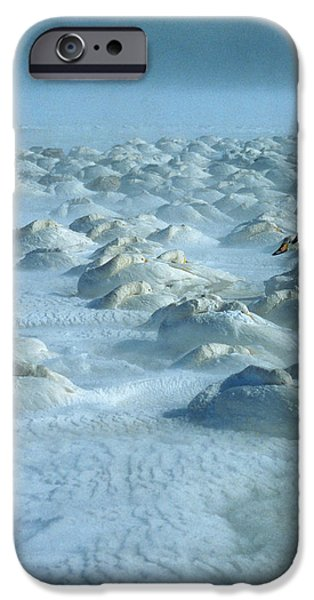 Whooper Swans in Snow iPhone Case by Teiji Saga and Photo Researchers