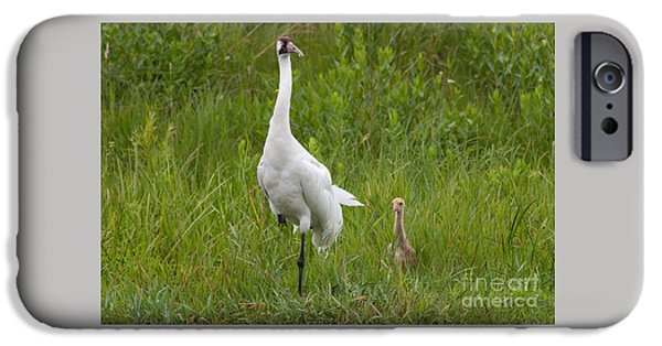 Scott Nelson Photographs iPhone Cases - Whooping Crane and Chick iPhone Case by Scott Nelson