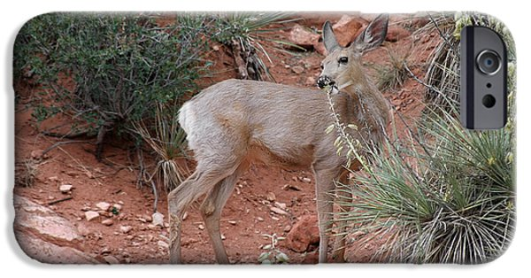 Tails iPhone Cases - Wild and Pretty - Garden of the Gods Colorado Springs iPhone Case by Christine Till