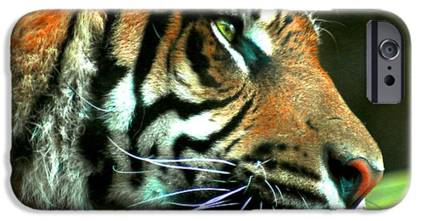 The Tiger iPhone Cases - Wild at Heart iPhone Case by Chelsea V