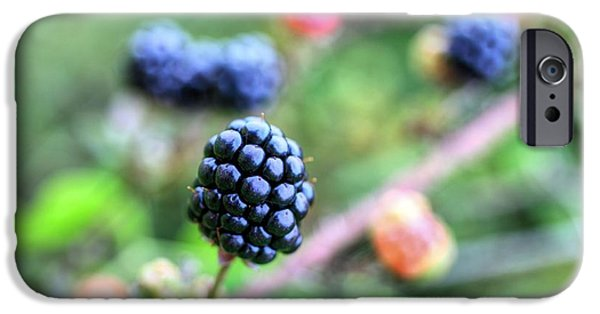 Black Berries iPhone Cases - Wild Berries  iPhone Case by JC Findley