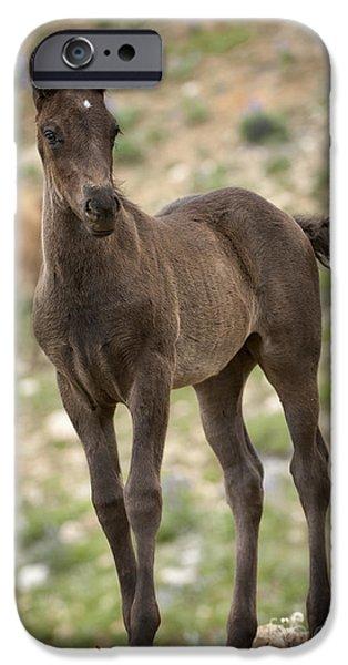Horse iPhone Cases - Wild Colt Curiosity iPhone Case by Wildlife Fine Art