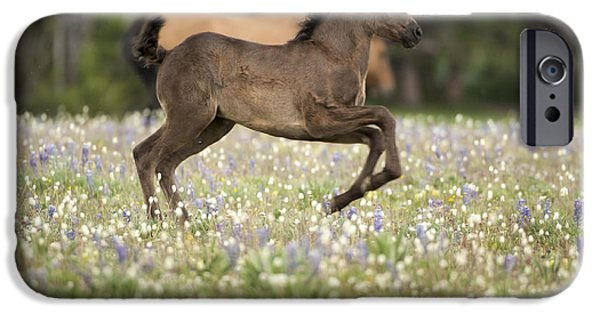 Young iPhone Cases - Wild Colt - Pryors iPhone Case by Wildlife Fine Art