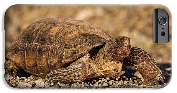 Reptile iPhone Cases - Wild Desert Tortoise Saguaro National Park iPhone Case by Steve Gadomski