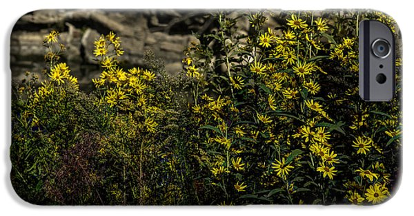 Meadow Photographs iPhone Cases - Wild Flowers iPhone Case by John Straton