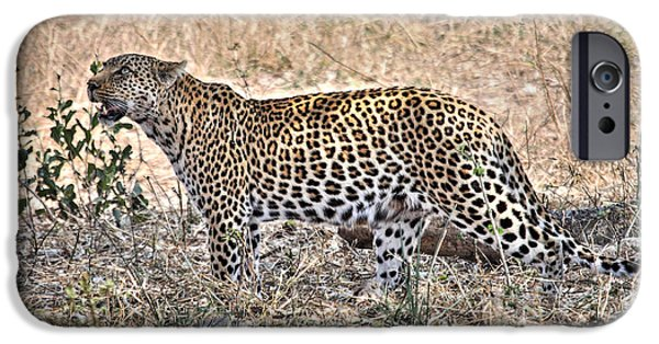 Animals Photographs iPhone Cases - Wild Leopard 1 iPhone Case by Sarah  Lalonde