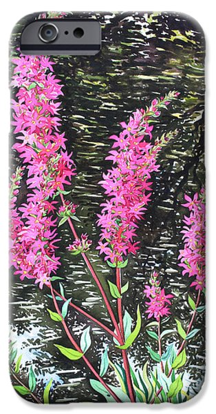 Botanical Drawings iPhone Cases - Wild Loosestrife iPhone Case by Christopher Ryland