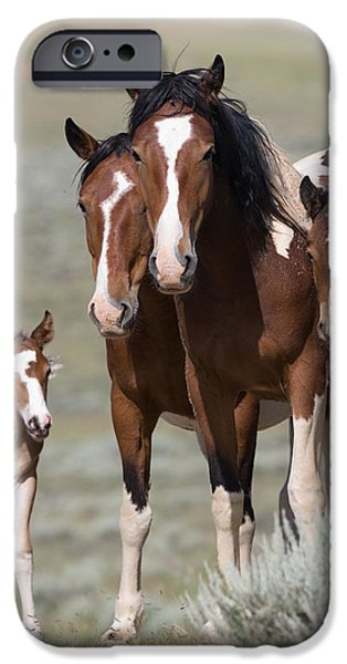 Wild Pinto Family iPhone Case by Carol Walker