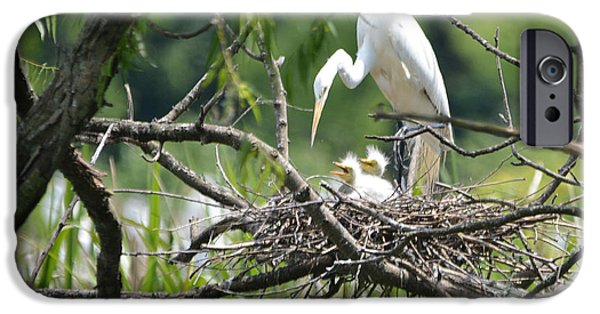 Snowy Day iPhone Cases - Wild Snowy White Egret with her fuzzy headed babies....Photo B iPhone Case by Barbara Dalton