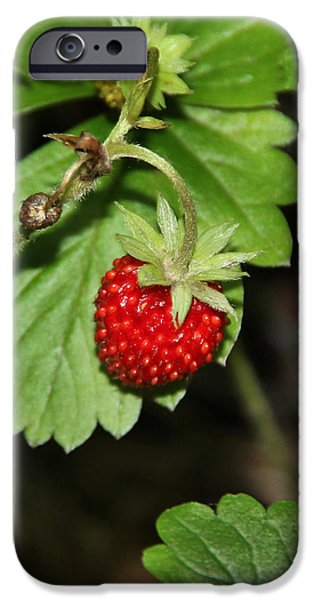 Berry iPhone Cases - Wild strawberry iPhone Case by Sergey Lukashin