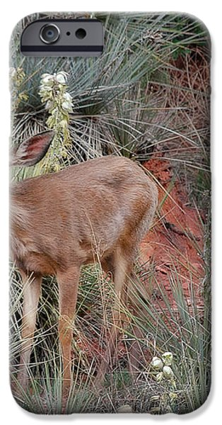 'Wild' Times at Garden of the Gods Colorado iPhone Case by Christine Till