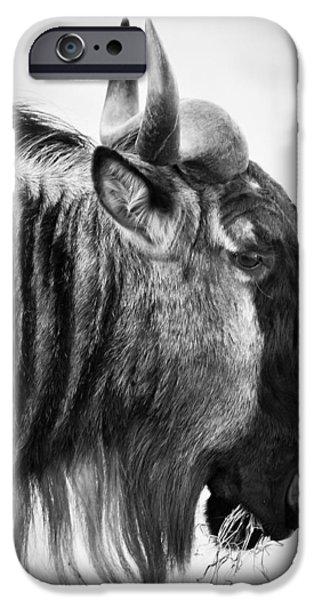 Ngorongoro Crater iPhone Cases - Wildebeest iPhone Case by Adam Romanowicz