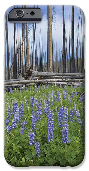 Wildfire iPhone Cases - Wildfire Rebirth iPhone Case by Noah Bryant
