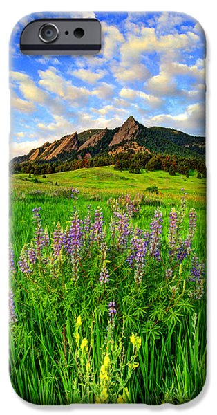 Fort Collins Photographs iPhone Cases - Wildflower Colors iPhone Case by Scott Mahon