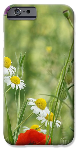 Nature Abstract iPhone Cases - Wildflowers 2 iPhone Case by Marcin Rogozinski