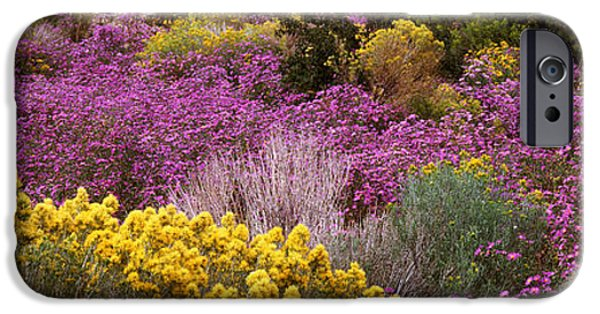 Mounds iPhone Cases - Wildflowers El Prado Nm iPhone Case by Panoramic Images