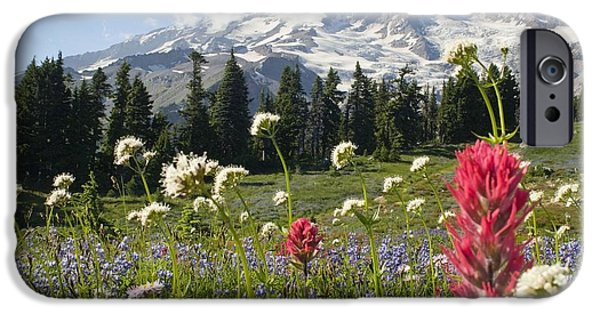 Attraction iPhone Cases - Wildflowers In Mount Rainier National iPhone Case by Dan Sherwood