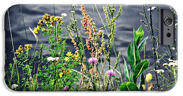 Botanical iPhone Cases - Wildflowers on the Rhine  iPhone Case by Sarah Loft