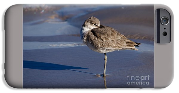 Young iPhone Cases - Willet Resting at the Beach iPhone Case by Debra Martz