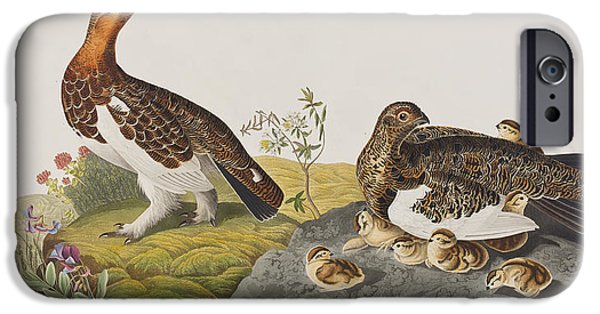 Large Drawings iPhone Cases - Willow Grouse or Large Ptarmigan iPhone Case by John James Audubon