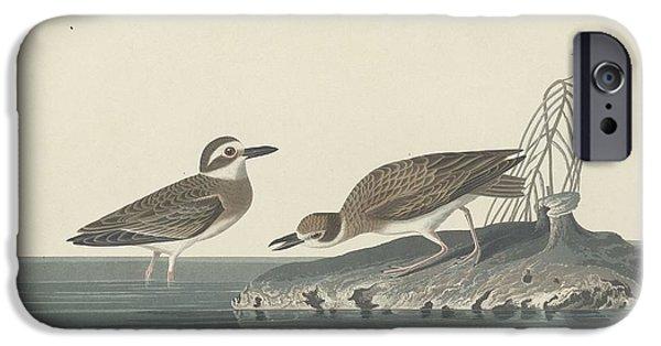 Shorebird iPhone Cases - Wilsons Plover iPhone Case by John James Audubon