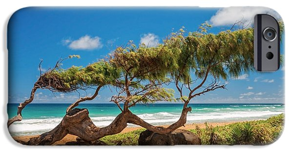 Pines iPhone Cases - Wind Blown Tree iPhone Case by Brian Harig