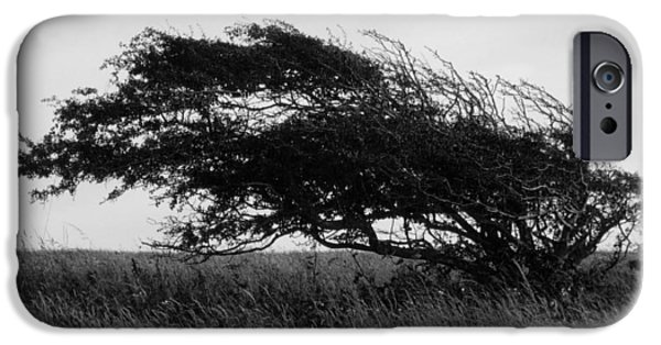 Poetic iPhone Cases - Wind Sculpture  iPhone Case by Connie Handscomb