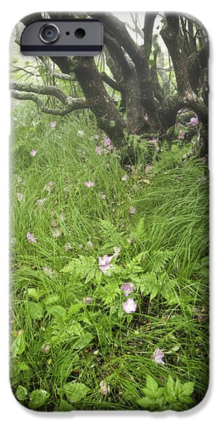 Misty Prints iPhone Cases - Windblown Grassy Craggy iPhone Case by Rob Travis